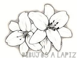 orquideas pintadas