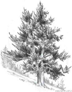 pino de navidad para colorear