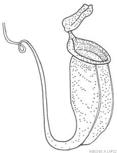 planta carnivora animada