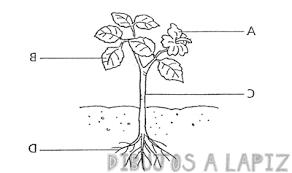 plantas medicinales fotos