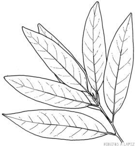 plantas medicinales para colorear