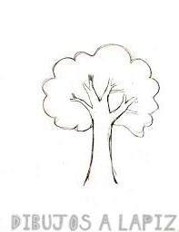 ramas de arbol dibujo