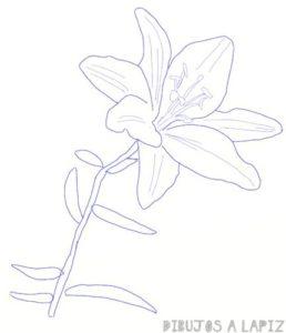 ver imagenes de flores de lirios